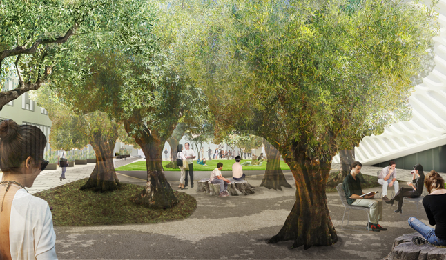 The plaza and 100-year-old Barouni olive trees; image courtesy of The Broad and Diller Scofidio + Renfro