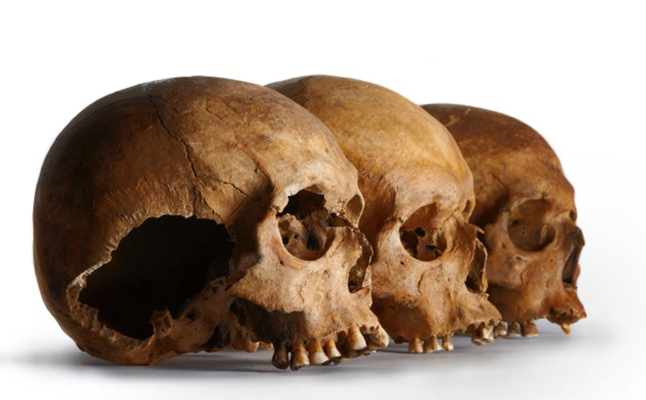 Skulls at the museum. Credit@Museum of London