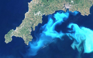 An increase in Phytoplankton off the south west coast of England. Credit@MikePeelwikipedia