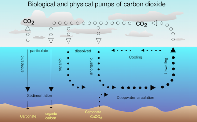 Biological and physical pumps of carbon dioxide.Credit@wikimedia