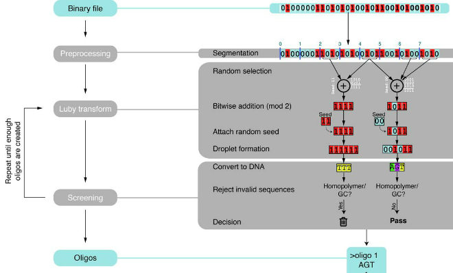 Researchers from the Columbia University of Engineering and Applied Science devised an algorithm to encode data on to DNA. This is known as the DNA Foundation Technique Credit@2017, American Association for the Advancement of Science.