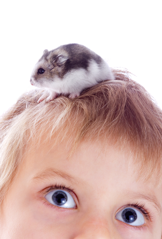 Child with hamster © Kmreport | Dreamstime.com