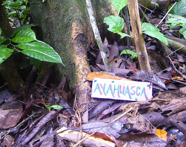 Peru Ayahuasca sign