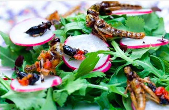 Salad with crickets. Credit@tjeatings