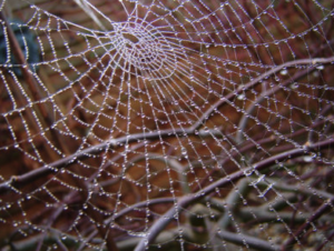 Spiders Web Credit @ Cybershot Dude via Flickr.com
