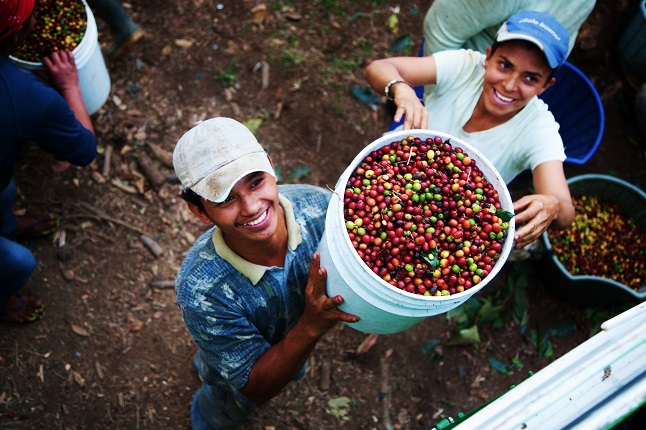 Nicaraguan coffee bean pickers. Credit@Ingmar Zahorsky via flickr.com