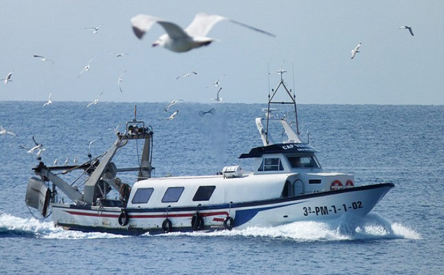 Seabirds flock to fishing boats. Credit @PeterKraayvangerviapixabay