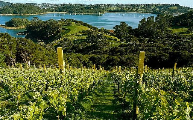 Waiheke-island credit@ Tourism New Zealand