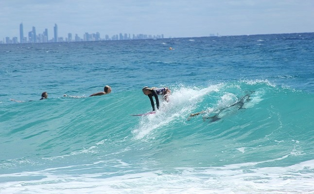 Surfers Paradise, Queensland. Credit@Daniel Dimarco via flickr.com