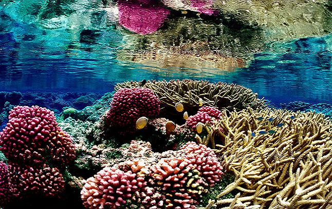 An example of the coral and marine species that can thrive underwater. Credit@ USFWS - Pacific Region via Flickr.com