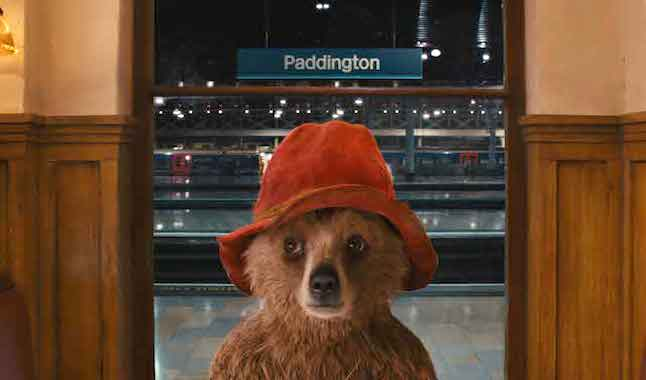 Playful Paddington bear!