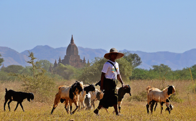Farmer working nearby Myanmar's ancient kingdom.Credit@Jennifer.Stahn.flickr.com